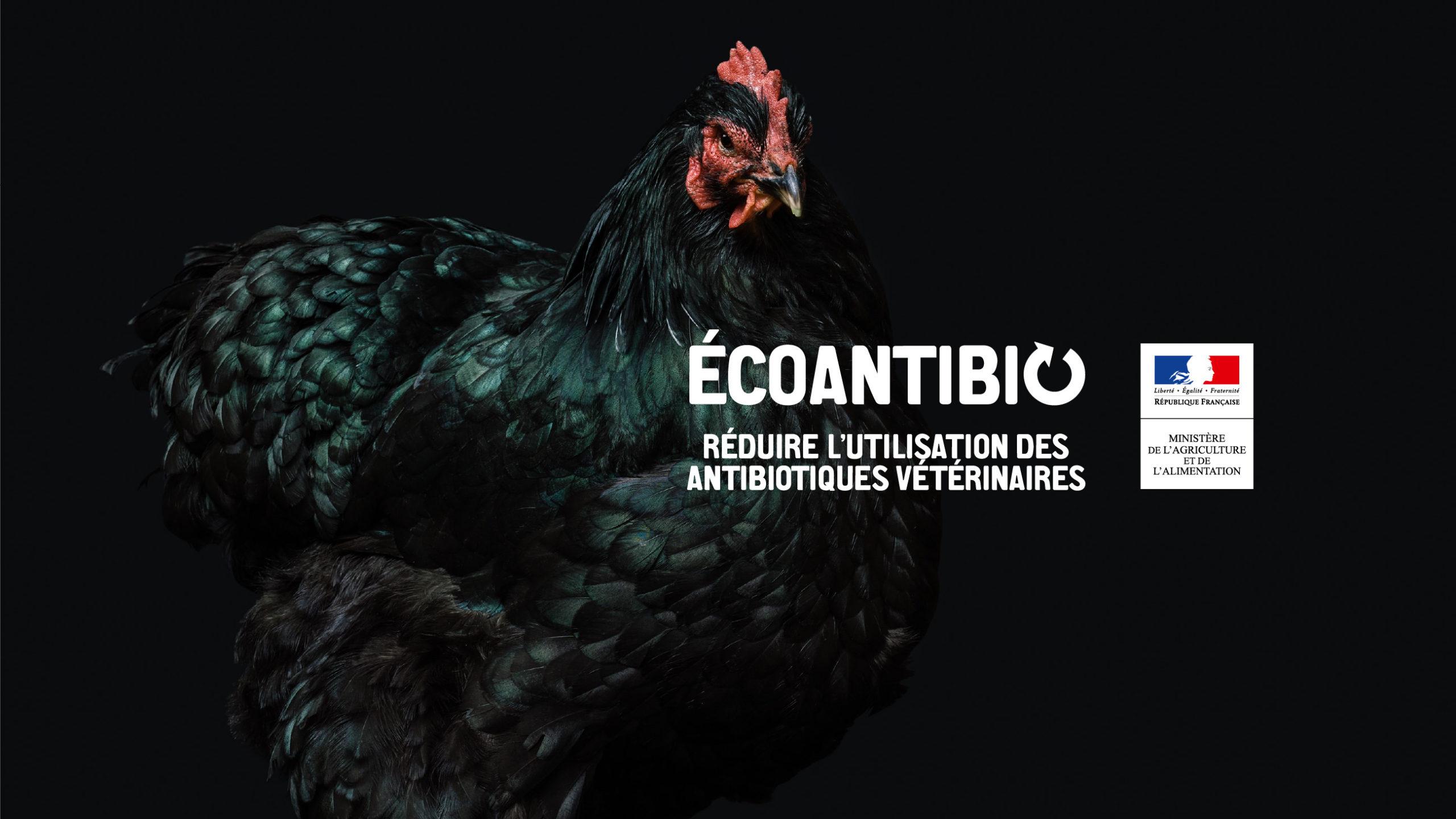 poster-ecoantibio-poule